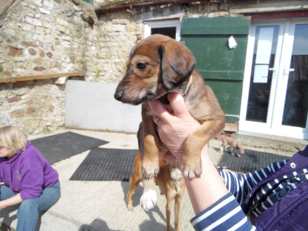 Puppies | SYD Rescue