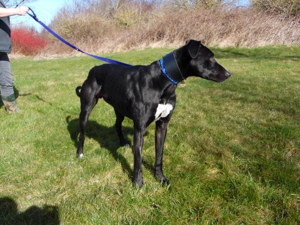 Rescue Dogs Needing Homes Uk